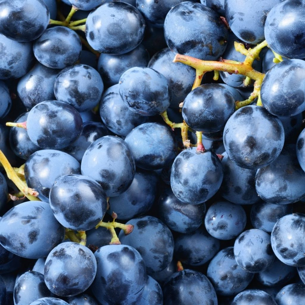 Aperitivos que comienzan con X - Xinomavro Grapes
