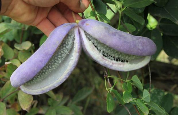 Fruta con X - xitegarcho