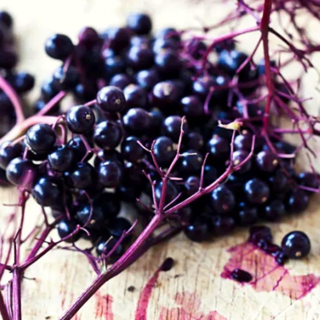 Frutas moradas - Bayas de saúco